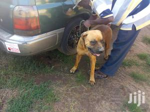 Specialized Veterinary Services For Dogs | Pet Services for sale in Kampala