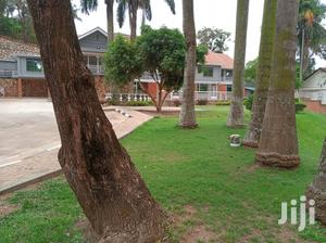 Office Block In Kololo For Rent   Commercial Property For Rent for sale in Kampala