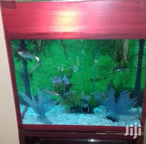 Aquarium In All Sizes | Fish for sale in Kampala