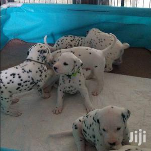 1-3 month Male Purebred Dalmatian | Dogs & Puppies for sale in Kampala