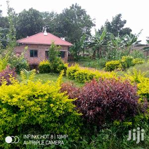Why U Keep Renting When Nice Home On Big Plot | Houses & Apartments For Sale for sale in Kampala