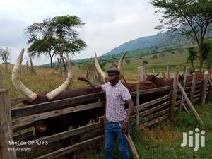 Farm Manager | Farming & Veterinary CVs for sale in Kampala