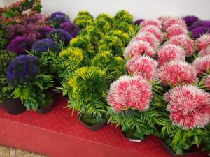 Flowers And Pot | Garden for sale in Kampala