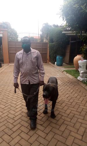Dog Training Services | Pet Services for sale in Kampala