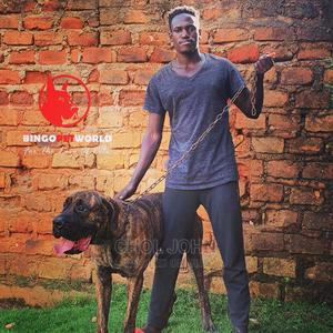 Dog Training | Pet Services for sale in Kampala
