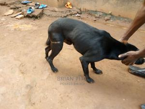 All Pet Services at Any Time | Pet Services for sale in Kampala