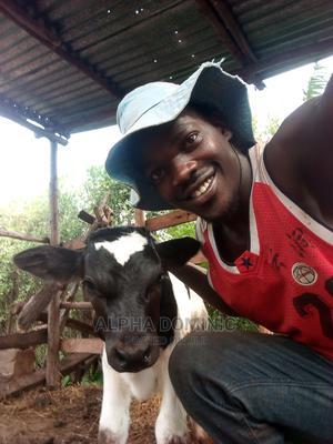 Livestock Farmer | Farming & Veterinary CVs for sale in Western Region, Masindi