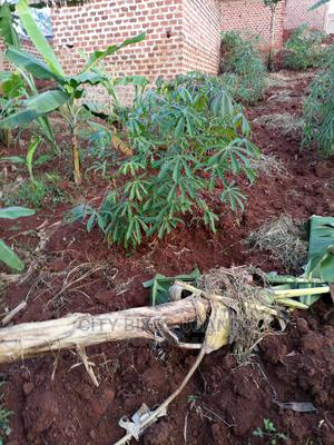 50 by 30ft at Buddo, After Kyengera   Land & Plots for Rent for sale in Kampala