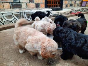 0-1 Month Female Purebred Maltese | Dogs & Puppies for sale in Kampala