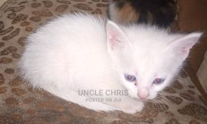 1-3 Month Male Mixed Breed Mongrel (No Breed) | Cats & Kittens for sale in Kampala