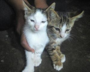 0-1 Month Female Mixed Breed Ocicat | Cats & Kittens for sale in Kampala