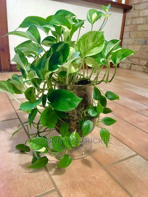 Indoor Plants Available | Garden for sale in Kampala
