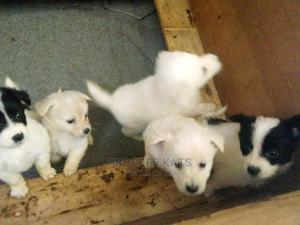 1-3 Month Female Purebred Golden Retriever | Dogs & Puppies for sale in Kampala