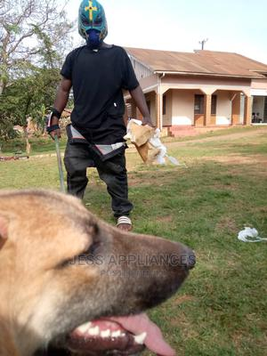 Professional Dog Training and Treatment | Pet Services for sale in Kampala