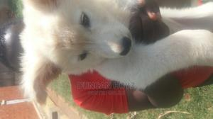 1-3 Month Male Mixed Breed German Shepherd | Dogs & Puppies for sale in Kampala