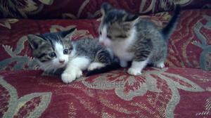 1-3 Month Female Mixed Breed Mongrel (No Breed) | Cats & Kittens for sale in Kampala