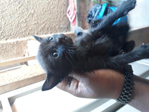0-1 Month Male Mixed Breed Bengal | Cats & Kittens for sale in Kampala