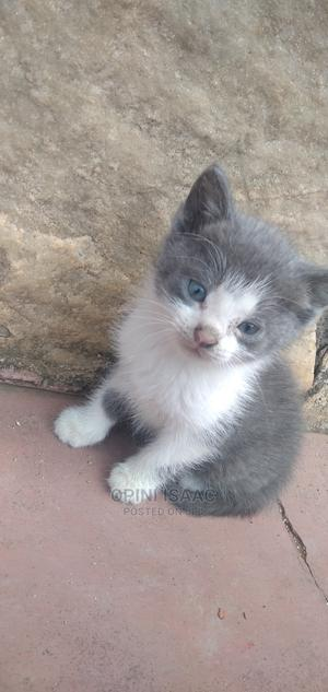 0-1 Month Male Mixed Breed Mongrel (No Breed) | Cats & Kittens for sale in Kampala