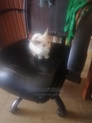 3-6 Month Female Mixed Breed American Shorthair | Cats & Kittens for sale in Kampala