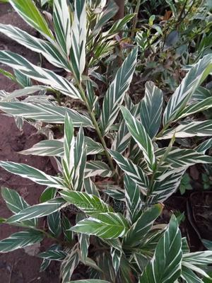This Is Halupinia Waity | Garden for sale in Kampala
