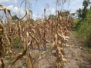 Farm for Sale | Land & Plots For Sale for sale in Kayunga