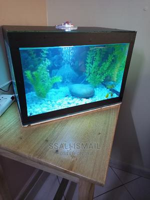 Best Small Aquarium | Fish for sale in Kampala, Central Division