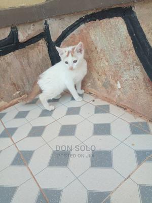 1-3 Month Female Purebred Bengal | Cats & Kittens for sale in Kampala, Central Division