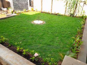 Get Natural Carpet Grass Part 1   Garden for sale in Kampala, Central Division