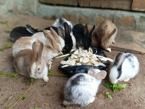 The Rabbits   Livestock & Poultry for sale in Kampala, Central Division
